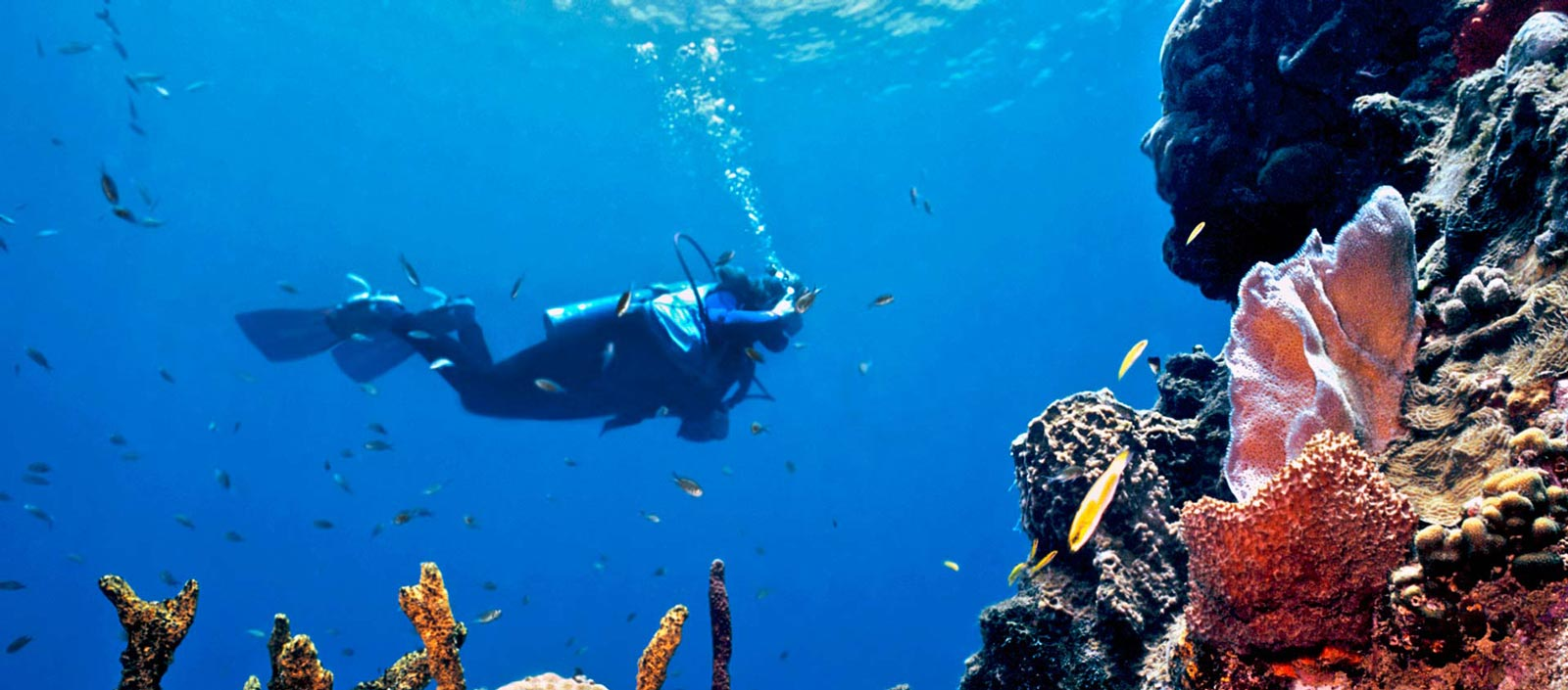 Sublime sailing and diving in St Vincent and the Grenadines