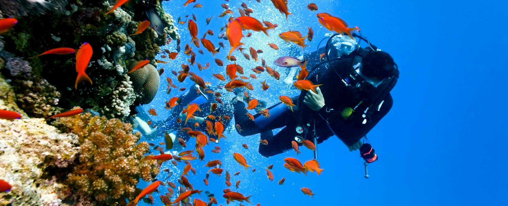 Diving in corals